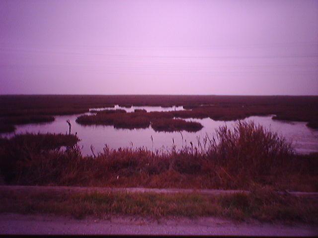 Baylands