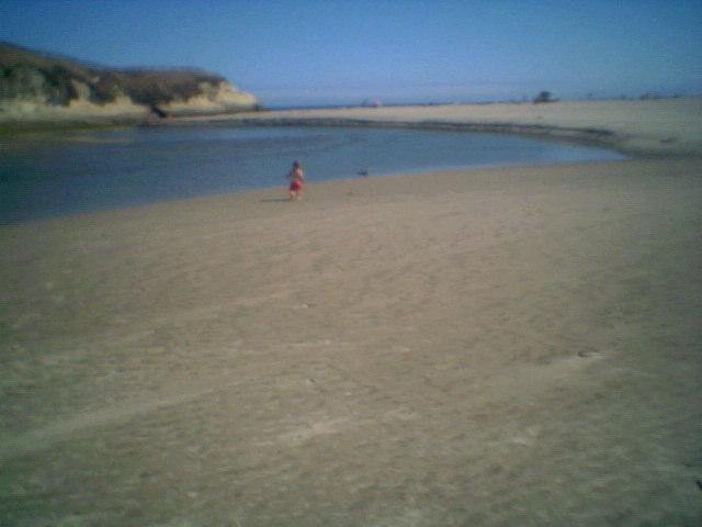 chasingseagull