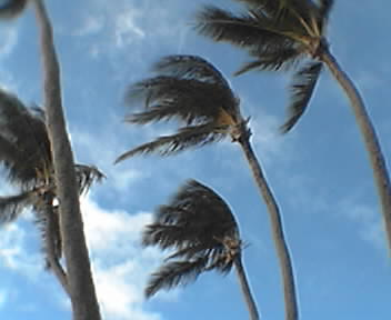 Windy Palms